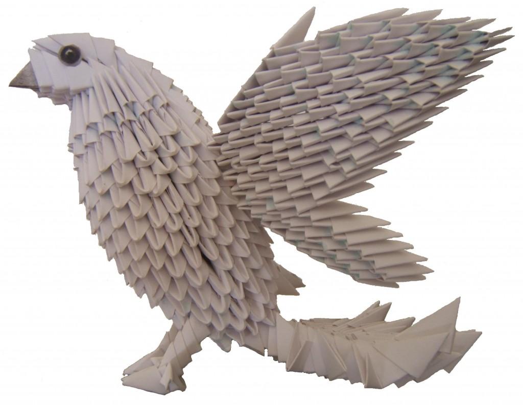 O11 colombe IMP