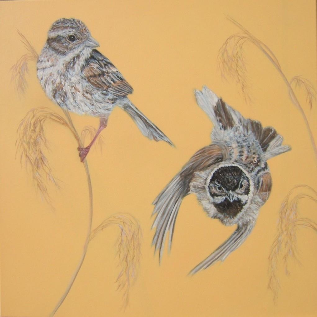 Peinture acrylique oiseaux bruant des roseaux