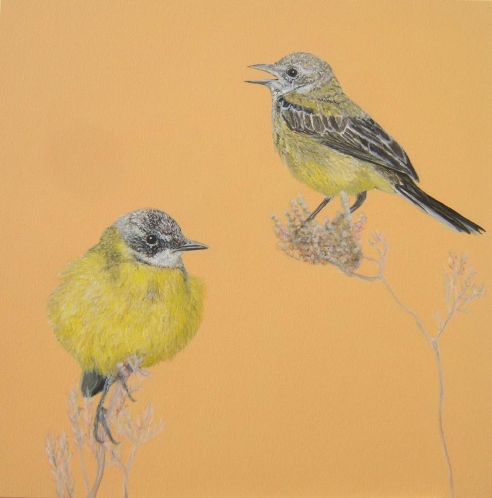 Peinture acrylique oiseaux bergeronnette printanière